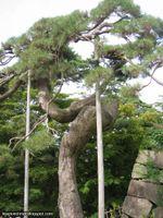 Château de Hirosaki