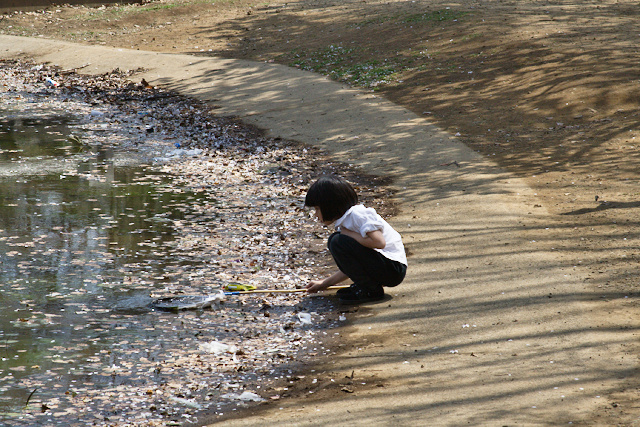 Parc de Yoyogi - Pêche aux pétales