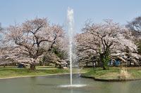 Parc de Yoyogi