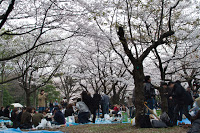 Parc de Yoyogi - Festivités