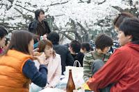 Parc de Yoyogi - Cerisiers autour d'une bière