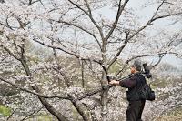 Kodomo no Kuni - A la recherche du cliché