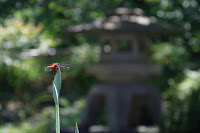 Temple Hasedera à Kamakura