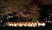 Cerisiers et banquets lors d'une croisière sur la Sumida