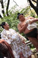 Tournoi de sumô dans l'enceinte du sanctuaire Yasukuni