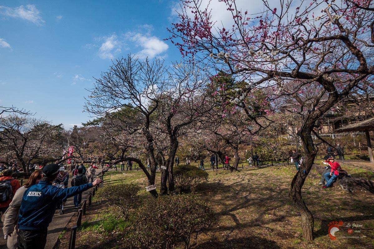 Pruniers en fleurs à Ôkurayama