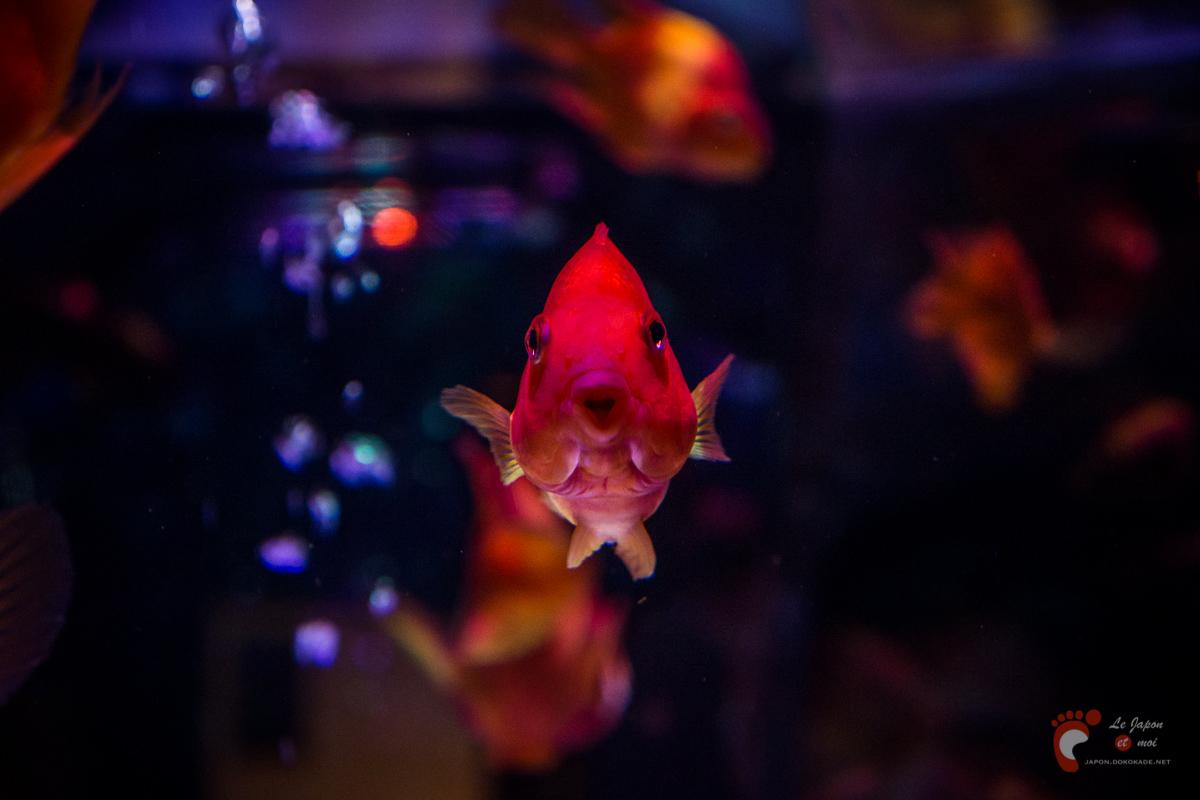 Art Aquarium 2012 | アートアクアリウム @ Coredo - Tôkyô