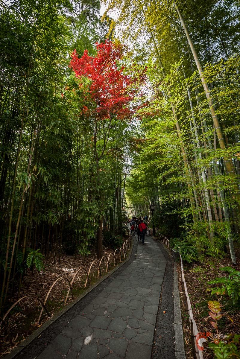 Shuzenji Onsen - Le chemin aux bambous 竹林の小経