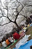 Parc de Yoyogi - Blousons et bâches bleues