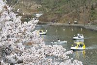 Kodomo no Kuni - Hanami en bateau