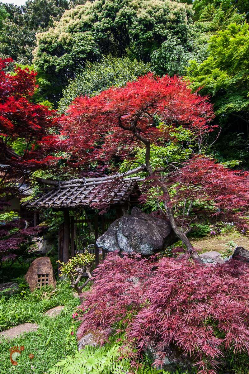 Jardin japonais secret