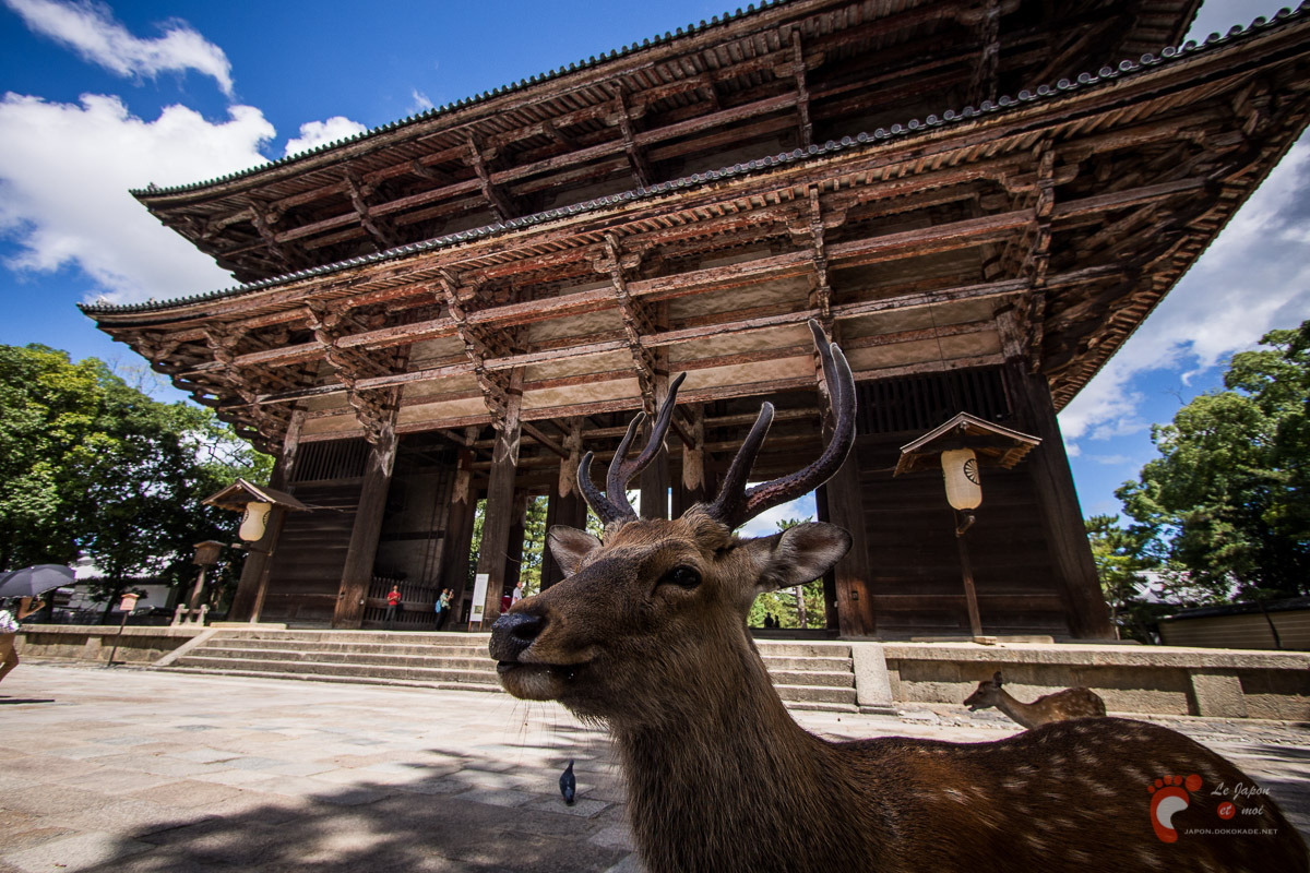 Nara - Tōdaiji : Nandaimon