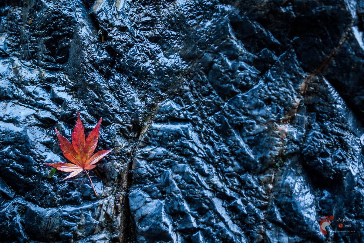 Automne végétal, automne minéral